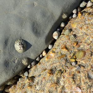 Limpets and periwinkles living on limestone and concrete and the crevice between the two.