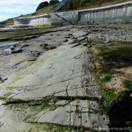 Rock ledges of Blue Lias limestone below the new sea wall at Lyme Regis