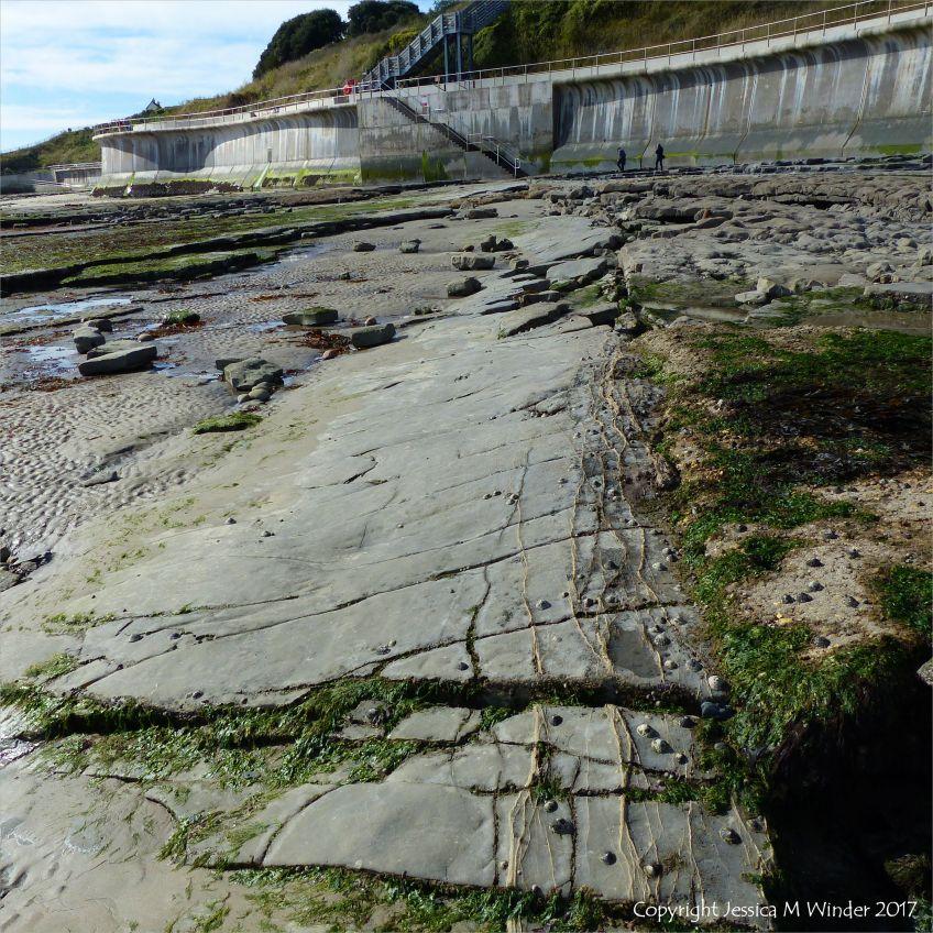 Rock ledges of Blue Lias limestone below the new sea wall at Lyme Regis