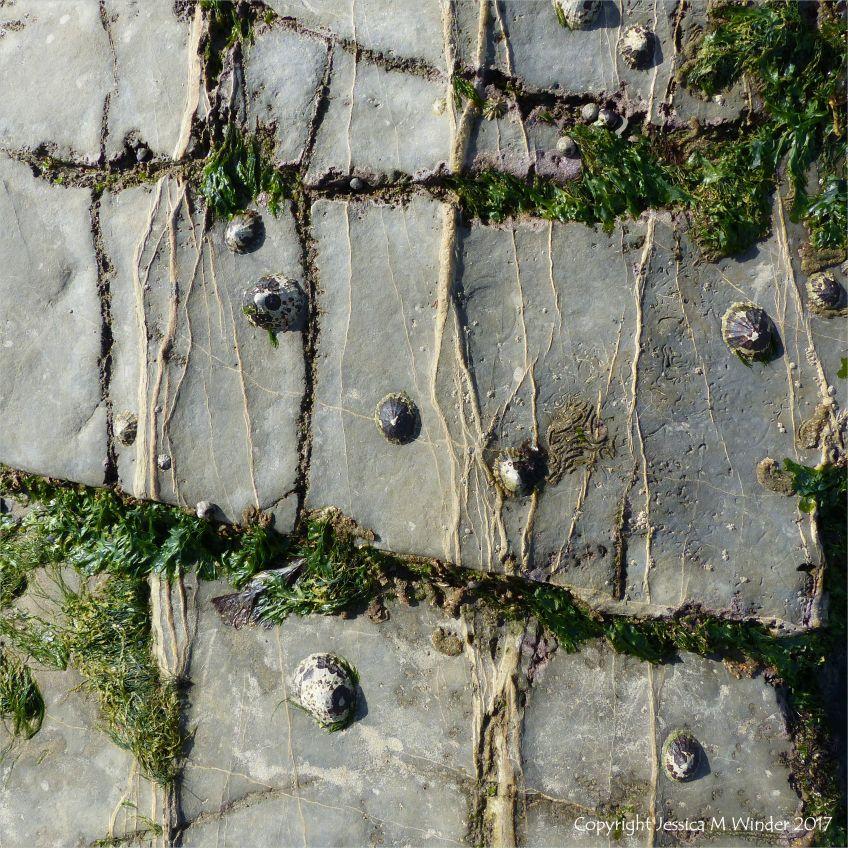 Seaweeds and seashore creatures on veined limestone