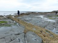 The rock platform below the sea wall at Church Cliff in Lyme Regis