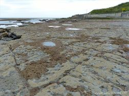 View of the limestone pavement below the new sea wall at Lyme Regis