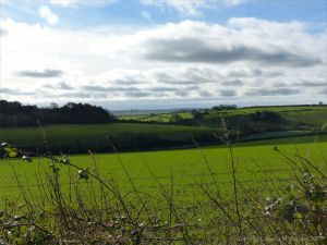 Views from a walk through arable fields in the Dorset countryside