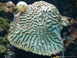 Coral in an aquarium