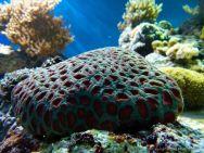 tropical coral in an aquarium