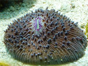 Coral in an aquarium
