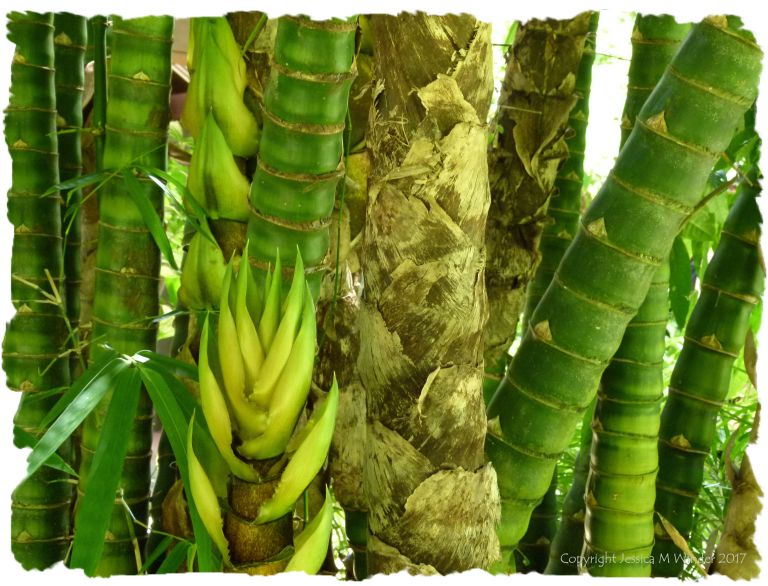 Tree trunks and sprouting leaves in the wet tropical rainforest