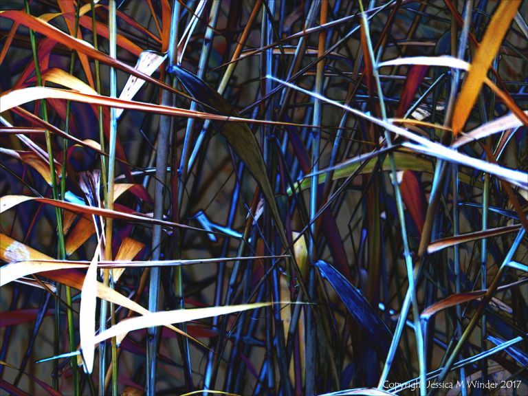 Stems and leaves of reeds in multicolours
