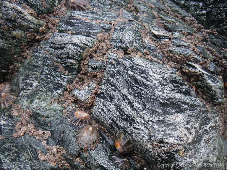 Close-up photograph of hornblende schist at Polurrian Cove in Cornwall