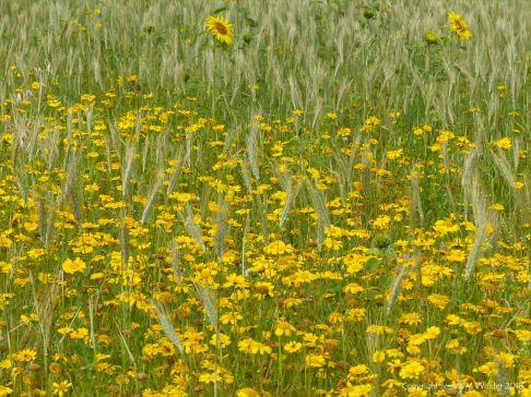 Sunny summer yellow flowers