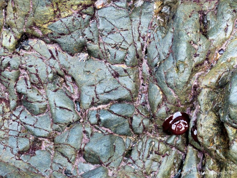 Texture and pattern in hornblende schist at polurrian Cove with attached anemones