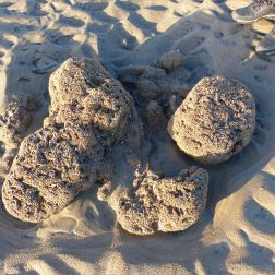 Boulders with honeycomb worm tubes