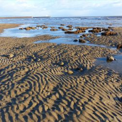 Boulders with Honeycomb Worm tubes at low tide in Swansea Bay amidst the rippled sand