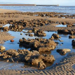 Boulders with Honeycomb Worm tubes at low tide in Swansea Bay