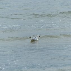 Sea bird on the water