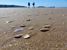 Rhossili Beach on a summer day showing golden sand and seashells
