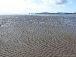 Sand rippled seashore with lugworm casts