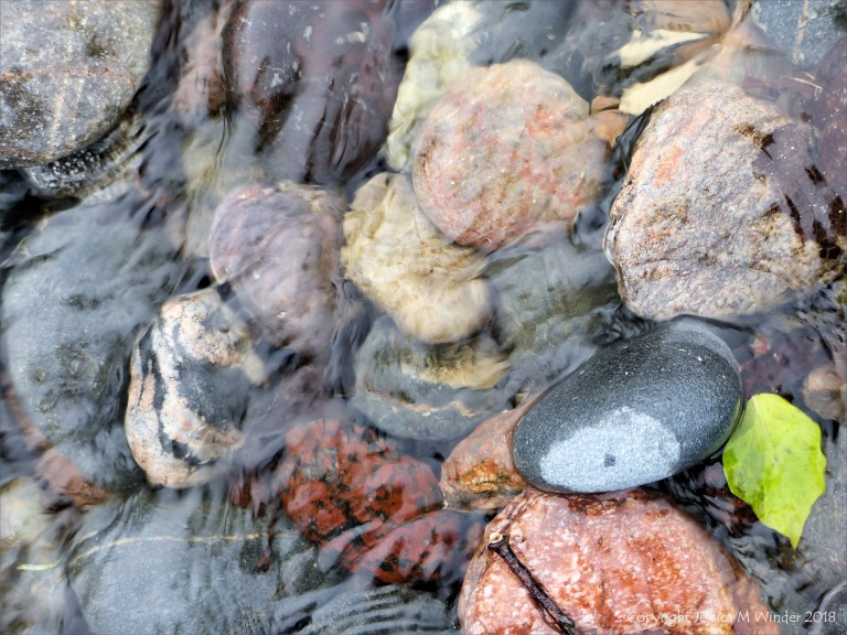 Pebbles in a beach stream at Kennack Sands