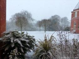 Snowy view from my window