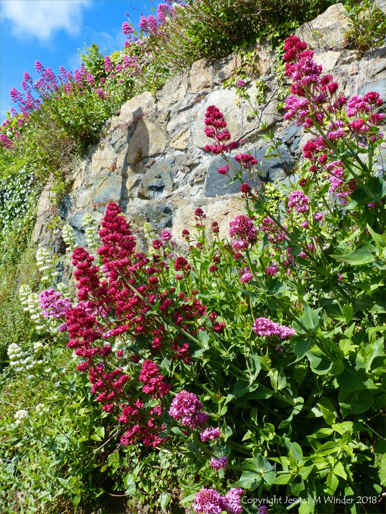 Red flowers growing on a stone wall