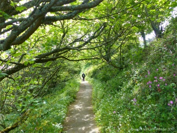 The cliff-top path from St Ives to Carbis Bay in Cornwall