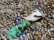 White trainer shoe and green rope washed up on a pebble beach