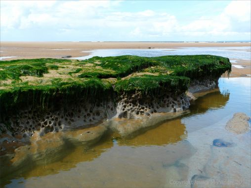 Piddock burrows in marine clay at Broughton Bay