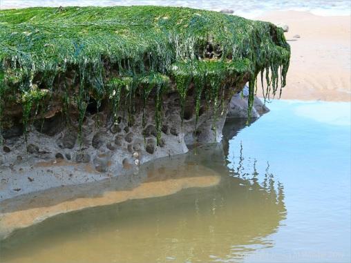 Piddock burrows in marine clay at Broughton Bay