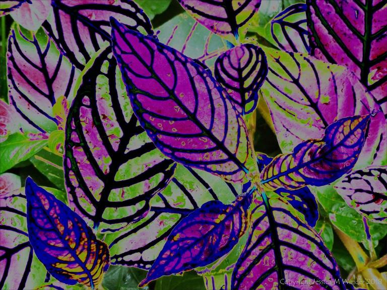 Leaf design in bright colours