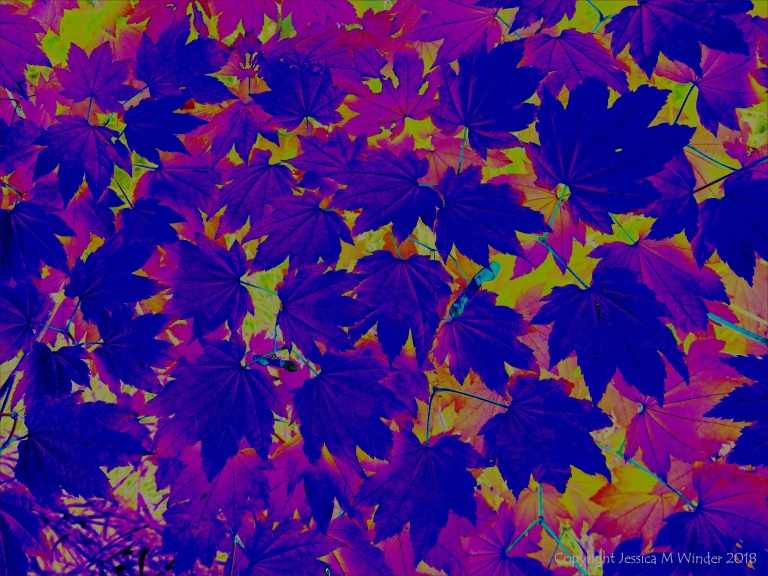 Leafy design in bright colours