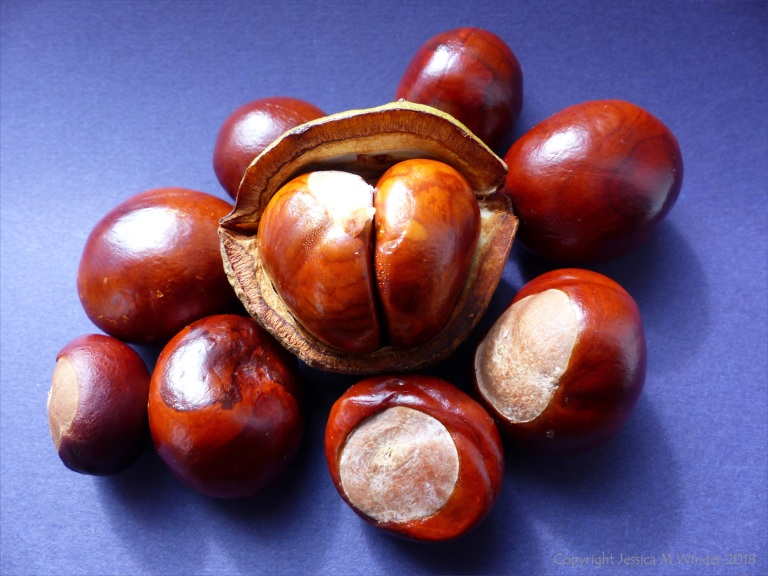Conkers1