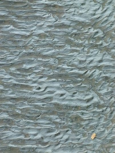Natural ripple patterns in tidal river mud