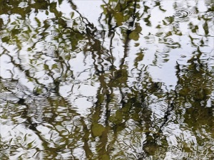 Natural abstract reflections on water