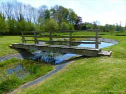 View of the pond in the nature reserve at Charlton Down in Dorset.