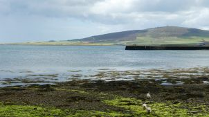 View looking east along the seashore at Finstown