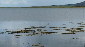 Calm water in the Bay of Firth at Finstown