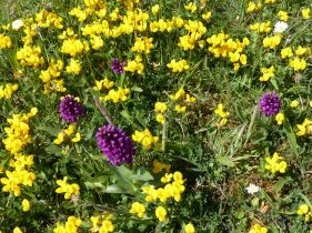 Pink and yellow wild flowers