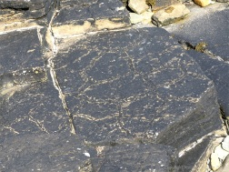 Fossil sun-cracks in flagstone at Point of Hellia in Orkney