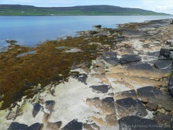 Flagstone and fucoids on the beach at Point of Hellia in Orkney