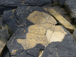 Upper Stromness Flagstone showing natural colour versus the black biofilm at Point of Hellia in Orkney