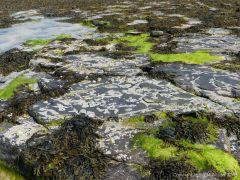 Rocky seashore at Grit Ness