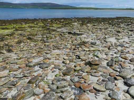 Cobble size beach stones made of Upper Stromness Flagstone at Grit Ness