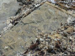 Natural patterns on Upper Stromness Flagstone at Grit Ness
