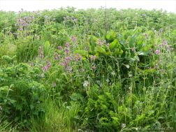 Lush vegetation at the top of the shore in Grit Ness