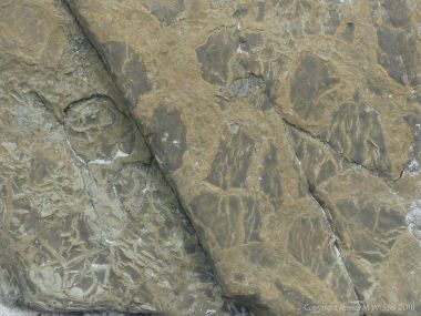 Natural patterns of pseudomorphs and sun cracks in Upper Stromness Flagstone