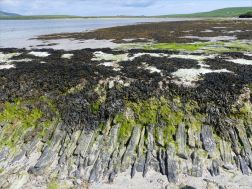 West face of old stonework pier at Grit Ness in Orkney