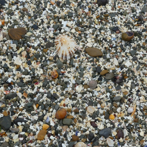Shelly sand on the beach at Birsay