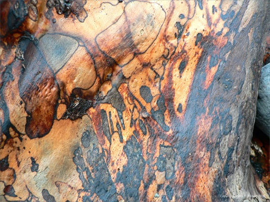 Spalted wood pattern in driftwood