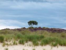 Sand dunes and heather behind Studland Beach