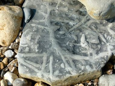 Natural pattern of trace fossils in limestone at Monmouth Bay in Lyme Regis, Dorset, Jurassic Coast